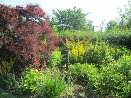 Foto 6 Garten mit Bungalow
