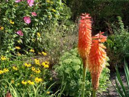 Foto 2 Garten mit Bungalow in Neuenhagen b. Berlin auf 400 qm Pachtland