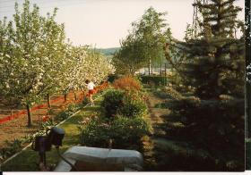 Foto 4 Garten mit Bungalow zu verkaufen