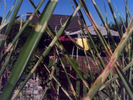 Foto 5 Garten mit Laube in Hannover-Kleefeld