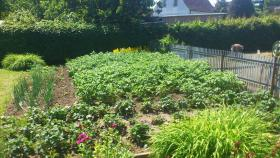 Foto 3 Garten mit massiven Bungalow auf Rügen