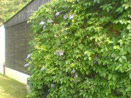 Foto 5 Garten in ruhiger Lage von Cottbus
