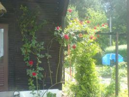 Foto 7 Garten in ruhiger Lage von Cottbus