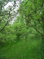 Foto 5 Gartengrundstück Marbach Kapitalanlage ohne Risiko