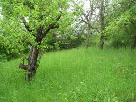 Foto 6 Gartengrundstück Marbach Kapitalanlage ohne Risiko