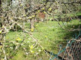 Gartengrundstück zu verkaufen. Sehr ruhige Halbhöhenlage mit Blick hinab zum Wald und auf den Frauenkopf.