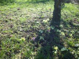 Foto 6 Gartengrundstück zu verkaufen. Sehr ruhige Halbhöhenlage mit Blick hinab zum Wald und auf den Frauenkopf.