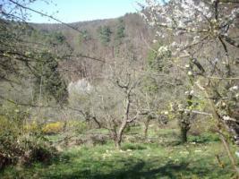 Foto 8 Gartengrundstück zu verkaufen. Sehr ruhige Halbhöhenlage mit Blick hinab zum Wald und auf den Frauenkopf.