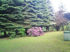 Gartenland mit Gartenhaus - Nähe Görlitz