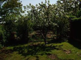 Foto 7 Gartenlaube mit Pachtland im Kleingartenverein