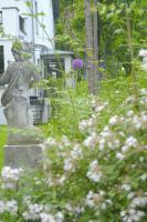Gartenplanung, Gartengestaltung, Gartenberatung, Gartenpflege