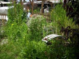 Foto 2 Gartenverkauf