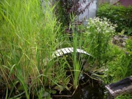 Foto 8 Gartenverkauf