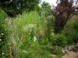 Foto 9 Gartenverkauf