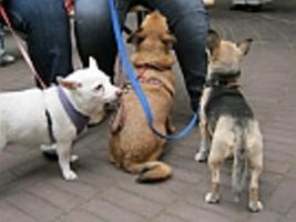 Gassi-Gängerin, Tierbetreuung, Dogsitting