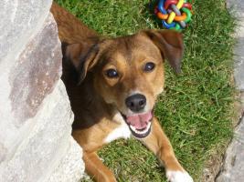 Gassigehservice & Tierpflege sehr erfahren und liebevoll