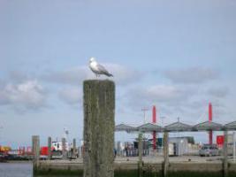 Foto 4 Geführte Trike-Touren durch Friesland , Ostfriesland, Nordseeküste