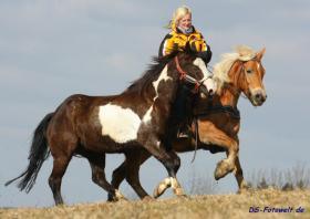 Foto 2 Geländesicherer Overo Paint Horse Wallach