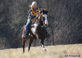 Foto 3 Geländesicherer Overo Paint Horse Wallach