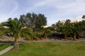 Foto 9 Gepflegter Bungalow mit 2 SZ in Maspalomas Langzeitmiete / Gran Canaria