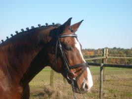 Gepflegtes Wohnen mit 4 Pferden i.d.Nähe von Reithalle