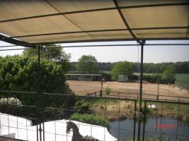 Foto 4 Gepflegtes Wohnen mit 4 Pferden i.d.Nähe von Reithalle
