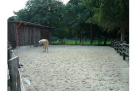 Foto 3 Geräumige Pferdebox mit Paddock & weidegang zu vermieten