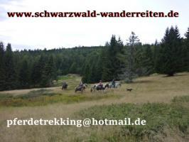 Foto 2 Geschenkidee für Reiter, Wanderreiter, Freizeitreiter - Wanderitt ab Todtmoos Au