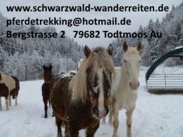 Foto 10 Geschenkidee für Reiter, Wanderreiter, Freizeitreiter - Wanderitt ab Todtmoos Au
