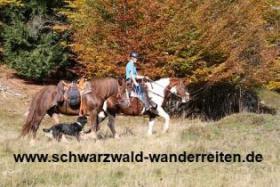 Foto 14 Geschenkidee für Reiter, Wanderreiter, Freizeitreiter - Wanderitt ab Todtmoos Au