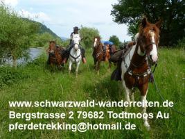 Foto 36 Geschenkidee für Reiter, Wanderreiter, Freizeitreiter - Wanderitt ab Todtmoos Au