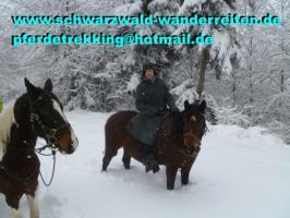 Foto 74 Geschenkidee für Reiter, Wanderreiter, Freizeitreiter - Wanderitt ab Todtmoos Au