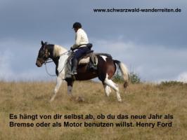 Foto 82 Geschenkidee für Reiter, Wanderreiter, Freizeitreiter - Wanderitt ab Todtmoos Au