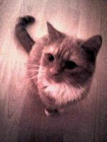 Foto 3 Geschwister Katzen