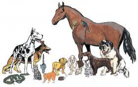 Gesundheits - Seminar für Hunde und Katzen