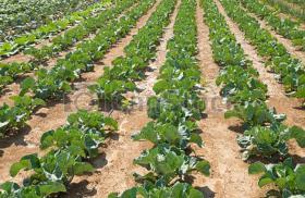 Gewerbliche Abnehmer für Gemüsehandel
