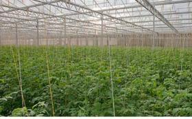 Foto 3 Gewerbliche Abnehmer für Gemüsehandel
