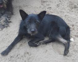 Foto 2 Gipsy, auf der suche nach seinem Zuhause