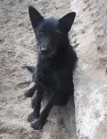 Foto 3 Gipsy, auf der suche nach seinem Zuhause