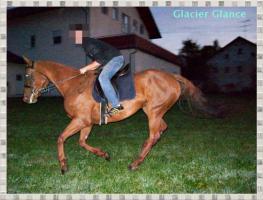 Glacier Glance-eine wahre Schönheit unter den Pferden