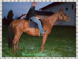 Foto 3 Glacier Glance-eine wahre Schönheit unter den Pferden