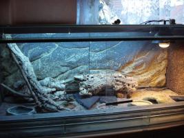 Glas Terrarium 120 x 50 x 50 mit Ausstattung