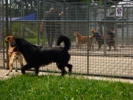 Foto 2 Gogo – XL-Traumhund !