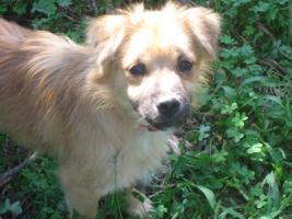 Foto 3 Gonzo - ein kleiner Sonnenschein (Tierschutzhund)
