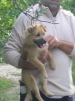 Foto 4 Gonzo - ein kleiner Sonnenschein (Tierschutzhund)