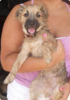 Foto 5 Gonzo - ein kleiner Sonnenschein (Tierschutzhund)