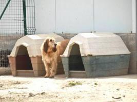 Foto 7 Grand Basset Griffon Vendéen - Mischling SAKI sucht ein Zuhause oder PS