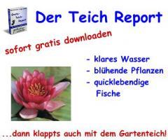 Gratis-Teich-Report >Klares Wasser >Bl�hende Pflanzen >Quicklebendige Fische
