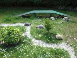 Foto 5 Griechische Landschildkröten zu verkaufen