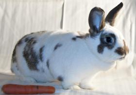 Foto 2 Große Kaninchen